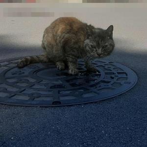 ムサ子 25日間の家猫生活