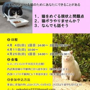 譲渡会報告(=^ェ^=)
