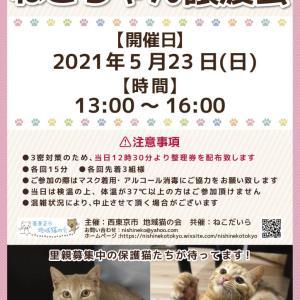 島忠ホームズ小平店譲渡会 5/23(日) 参加猫さんたち