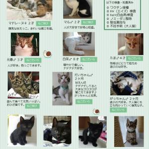 本日参加の猫たち(=^・^=)