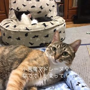 本日7/11(日)譲渡会 ねこ結びさんの参加猫たち(=^ェ^=)