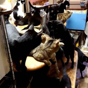東大和猫80匹多頭飼育崩壊現場の猫たち ☆譲渡会開催☆