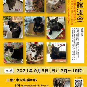 東大和猫80匹 @higashiyamato_80cats 譲渡会お待ちしています!