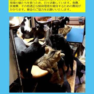 東大和猫80匹 @higashiyamato_80cats 譲渡会 無事終了(^^)
