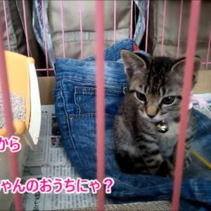 初めてのケージ・子猫時代②
