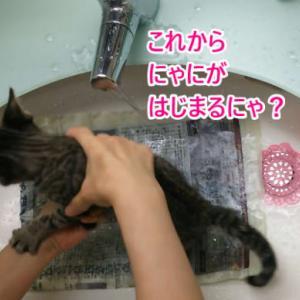 初めてのシャンプー・子猫時代④