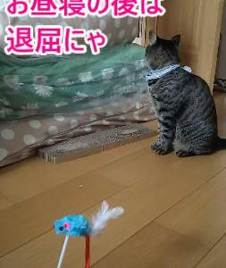 ネズミのおもちゃで狩り