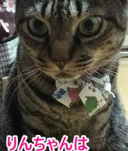 洗面台に猫発見!!