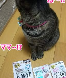 極楽ねこカレンダー参加賞!!