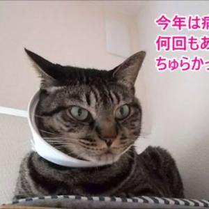 猫も人を観る・とんでもない理由?