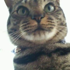 スマホアプリで猫にシャッター押させたら