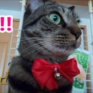 リボン付き・猫の首輪作ってみた