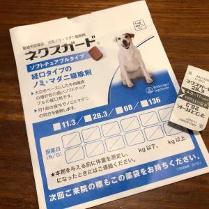 愛犬の予防接種