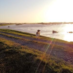 夕日での散歩