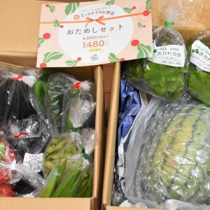 【今月のお野菜】らでぃっしゅぼーや様より届きました