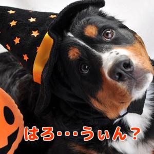 今夜は懐かしHappy Halloween~♪Ψ(o゚∀゚o)Ψ