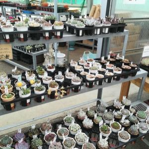 第二回!多肉植物EXPOの戦利品!