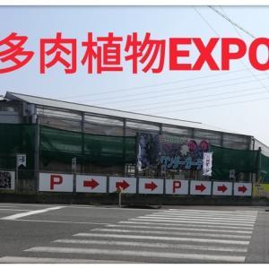 第二回!多肉植物EXPOに潜入した!!