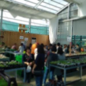 多肉植物EXPOにはレアな多肉が満載だった