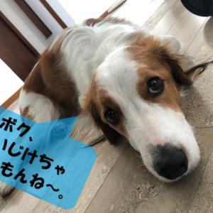 愛犬の目を守るために!part2