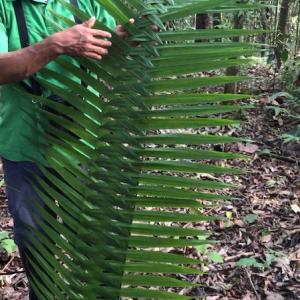 アマゾン熱帯雨林の奥地探検ツアー、1日目