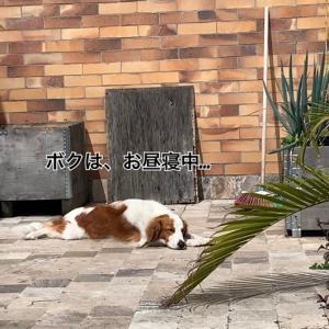 犬だって、鳥だって、怠けるのが大好きです。