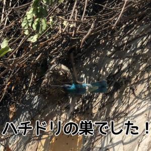 レックスのお陰で、超レアな、ハチドリの巣を発見!