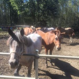 馬たち全頭無事、しかも無傷です
