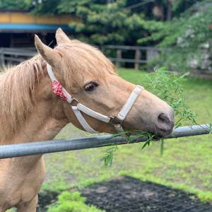 馬の日のお客さま