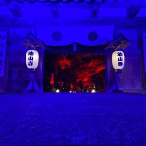 油山寺ライトアップに行ってきまいした!紅葉のライトアップ、ただただ綺麗とはまた違う幻想的な世界。