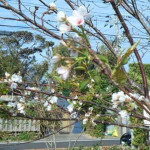 もりもり通信!(^^)! ~春のお花が・・・~