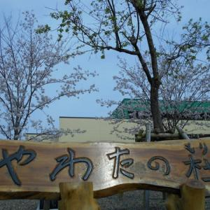 もりもり通信!(^^)! ~桜が満開の新年度~