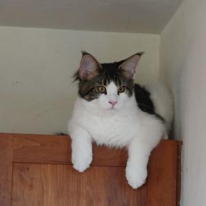 猫たちの飛び降り対策、リフォームしました!