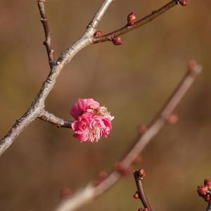 国立昭和記念公園の冬の花。 and  長毛猫3兄弟日記。