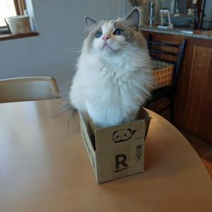 猫はやっぱり箱が好き