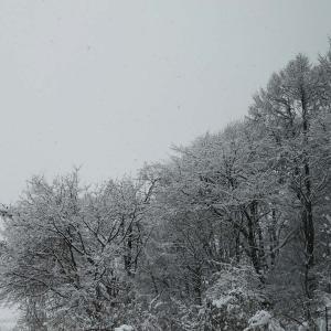 また雪が降りました。 and  ラグドール猫日記