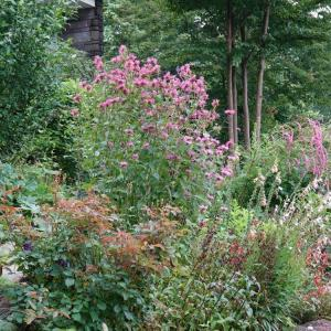 庭の様子、モナルダ、キキョウ、ヤマユリなど