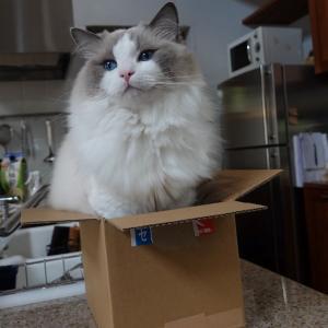 やっぱり箱が好き 山の家の猫日記