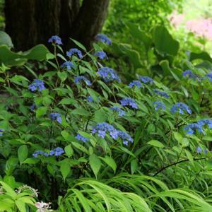 庭の様子 藍姫と紅