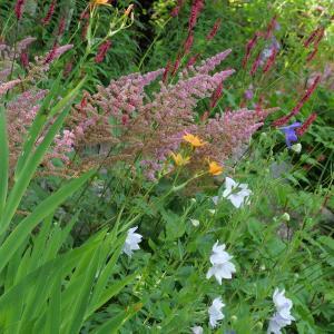 庭の風景とヤマユリの開花  and 八ヶ岳の夕焼け