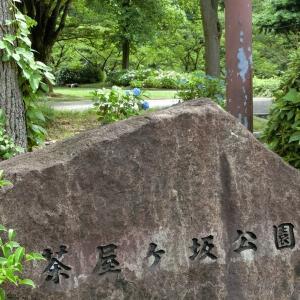 茶屋ヶ坂公園のあじさいを見てきました。
