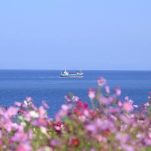コスモスの咲く岬へ - 長崎鼻 -