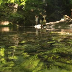 通り過ぎた夏 - 男池湧水群 -