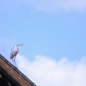 気温が5℃下がる - 七瀬川自然公園 -