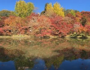 見上げると赤、黄、緑のパズル - 用作公園・岡城 -