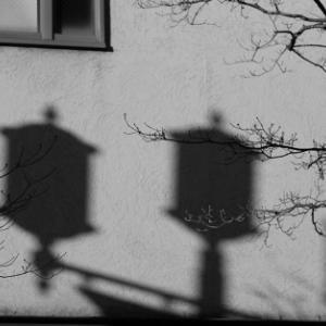 影を伸ばす枯れ枝 - 中央町界隈-