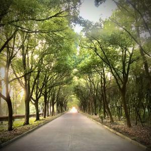 木のトンネル。住処決定。送別会ラッシュ。