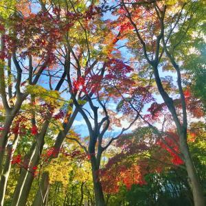 ロングウォーク to 三田。錦秋の東京求めて