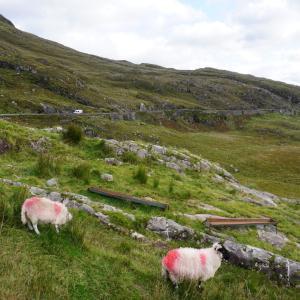 アイルランドで1番よかった!最高すぎるキラーニー国立公園