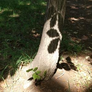 小さな森☆朝散歩  光と影と優しい時間☆